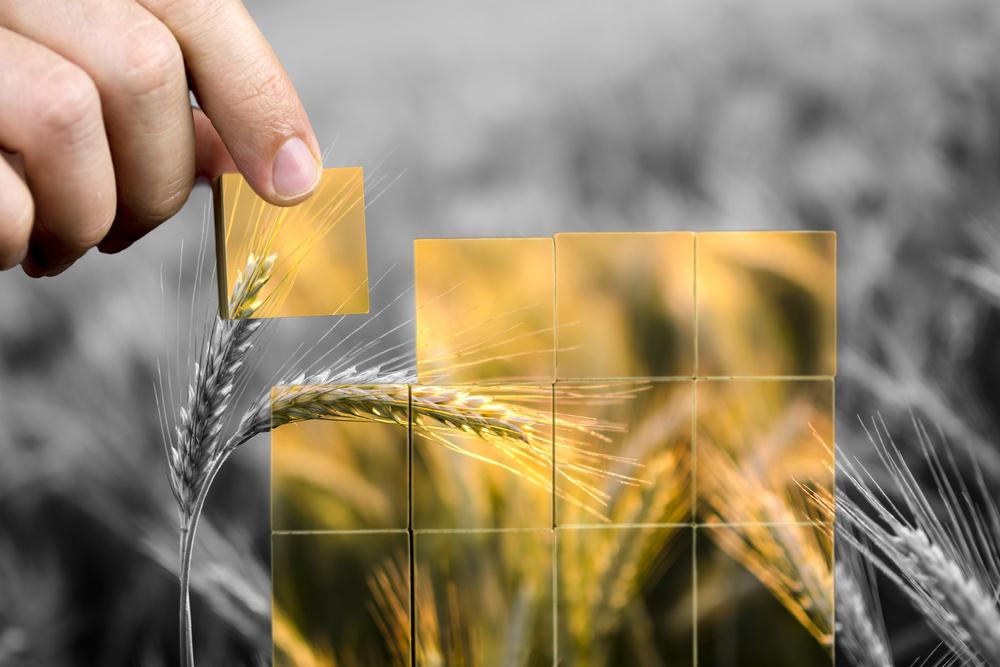 food security for entrepreneurs