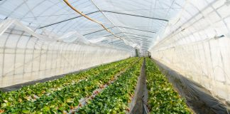 Commercial Farms